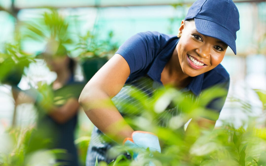 Migrant Workers' Rights: How does Ontario Law Protect Temporary Foreign Workers?